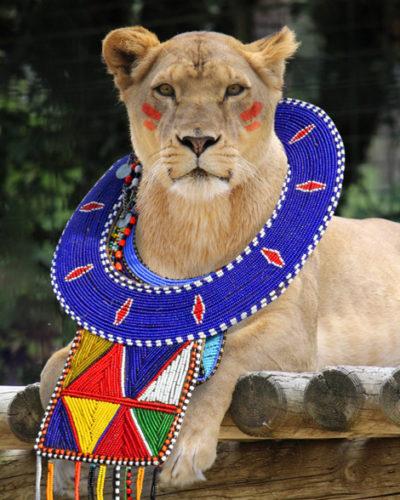 barevná-afrika